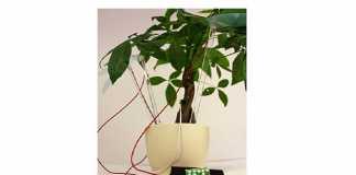 plants main