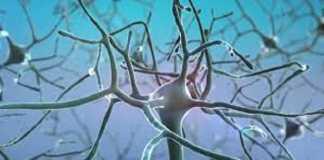 nerve cell modelling