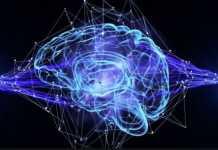 brain-signal-1