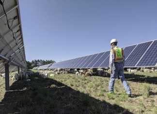 Israeli government greenlights plan to add 15 GW of solar by 2030