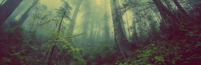 The Forest Ecosystem is Thriving, Thanks to AI Intervention